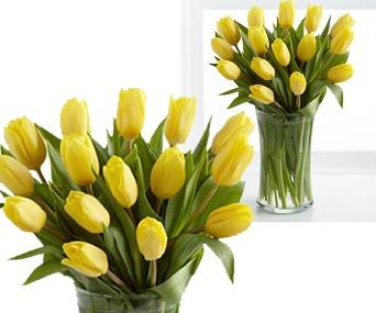 Holandské tulipány yellow